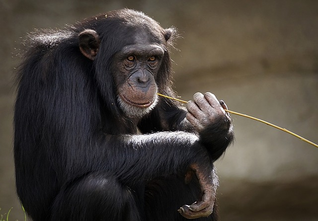 I'll be a monkey's uncle