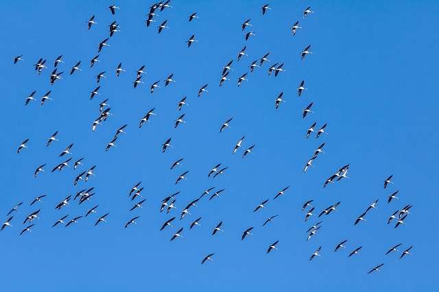 birds of a feather stick together - idioms about friendship