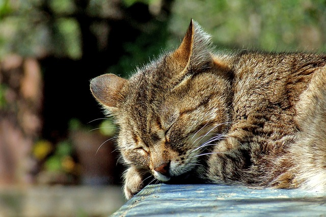 cat nap - idioms about sleep