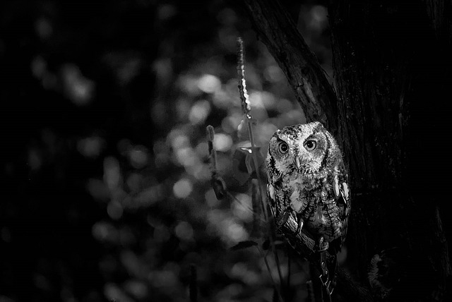 night owl - sleep idioms