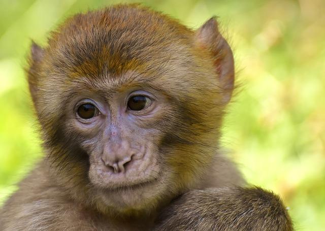 monkey idioms