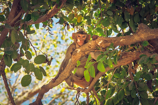 a monkey knows how to climb a tree - monkey idioms