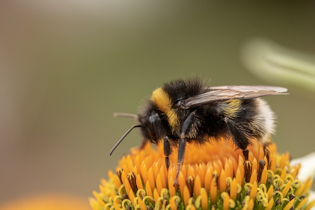 to be as busy as a bee