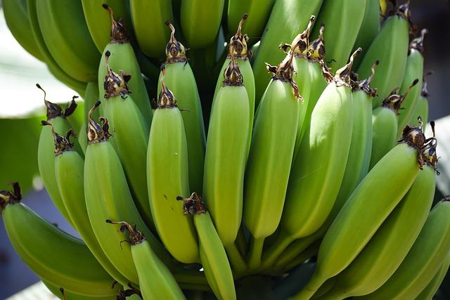 I don't buy green bananas