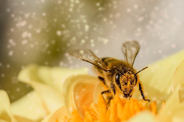 to be busy as a bee - idioms for kids